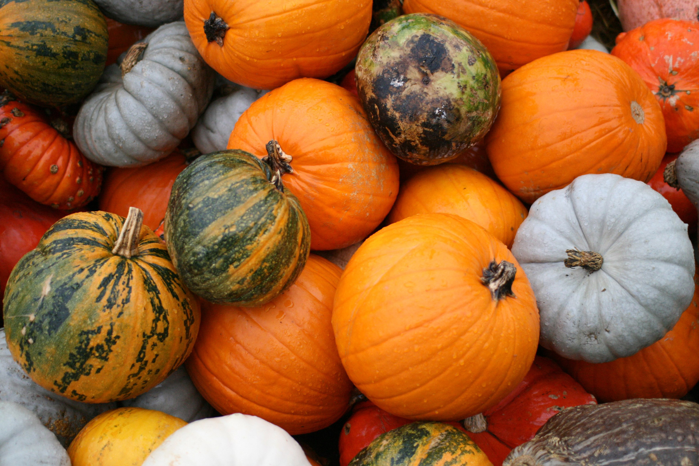 Pumpkins! © Jeremy Seitz - Flickr.com (used under CC BY 2.0 – Unmodified)