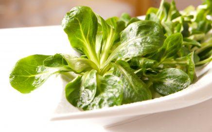 salad-1197845